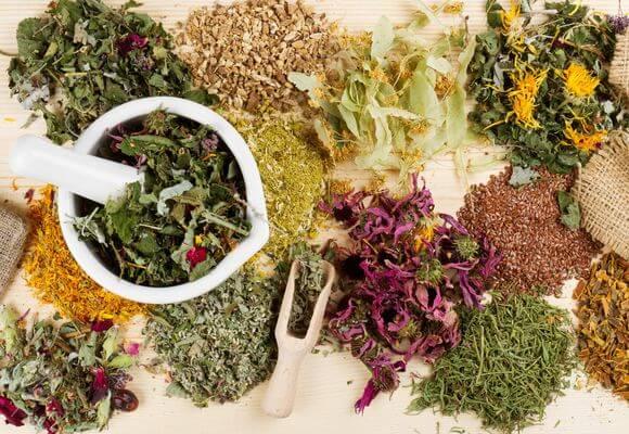 лекарственные травы от варикоза