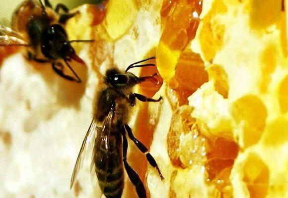 Пчелиный клей