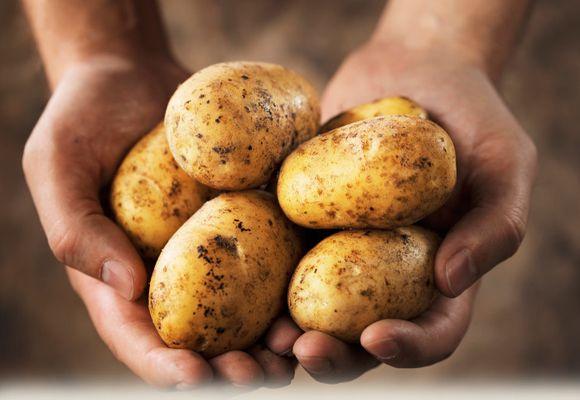 Картошка при варикозном недуге