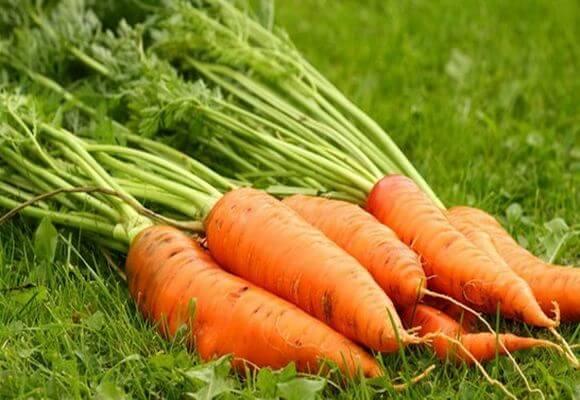 морковная ботва от диабета